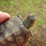 Consejos para evitar hongos en las tortugas