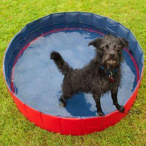 Piscinas para perros que pasen un verano fresquito for Piscina para perros