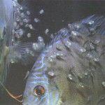Consejos para la cría de peces