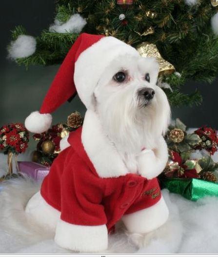 Gorro de Navidad para perros, Navidad 2010