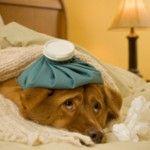 ¿Los perros se resfrían?