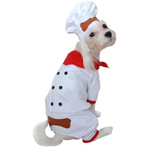 DISFRACES DE MASCOTAS: disfraces para mascotas