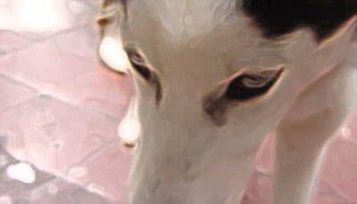 Mirada de un perro