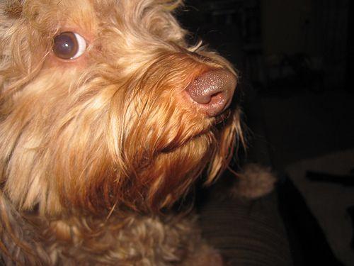 Visión de nuestro perro