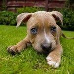 Alergias en los perros