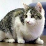 Verdades y mentiras sobre el gato