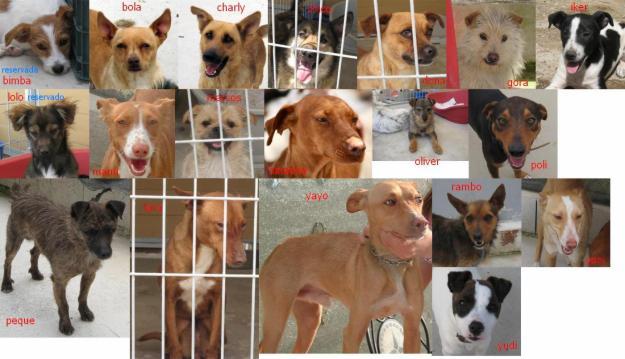 Perros en adopción de Priego de Cordoba