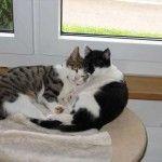 Un estudio demuestra el gran amor de los amos por sus mascotas