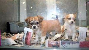 prohibicion-tiendas-perros-gatos-