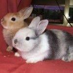 Los conejos, una buena y tranquila mascota para cualquier hogar