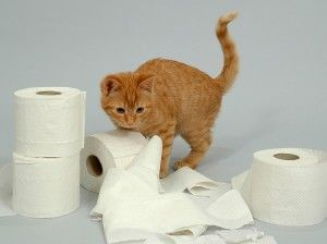 gatos travesura