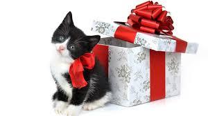 regalos gatos