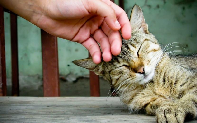 Acariciar a un gato