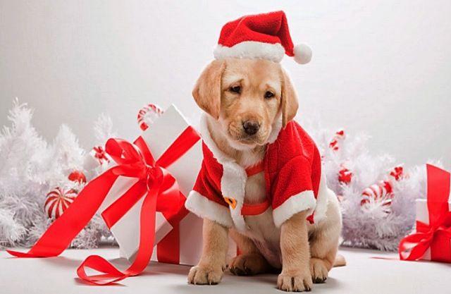 No regalar mascotas en Navidad