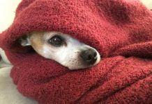 Perro abrigado en invierno