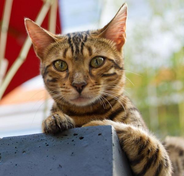 El marcaje de los gatos en una casa