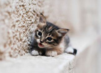 Gatito enfadado