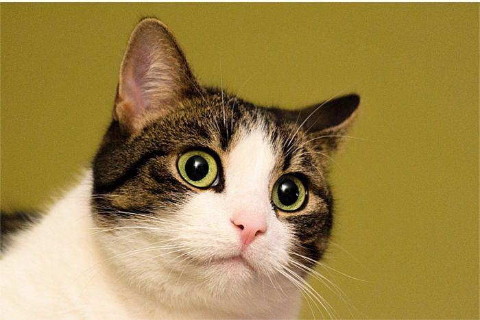 Gato muy sorprendido