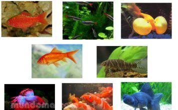 Los peces del acuario