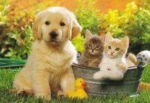 Mascotas en el jardín