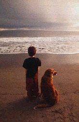 Perro y niño en la playa