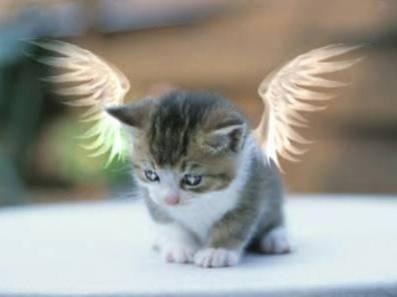 Gatito angelito