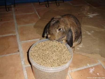 Alimentación de conejos