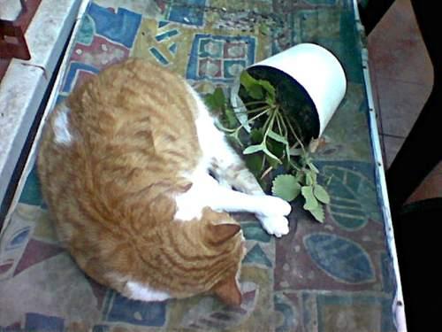 Gato jugando con plantas