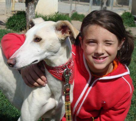 Terry, perro en adopción