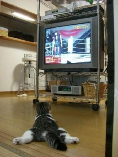 Gato mirando la televisión