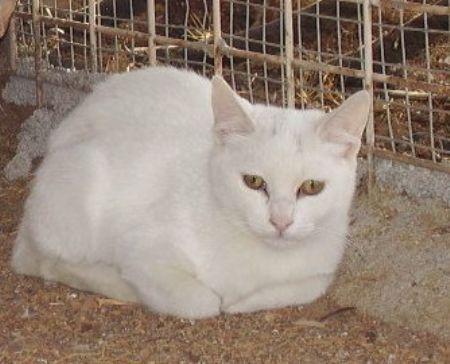Gato Dilan en adopción