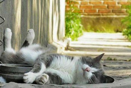 Gato descansando en la calle