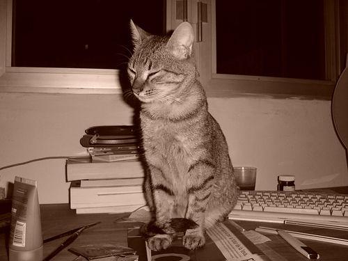 Gato sobre la mesa del ordenador