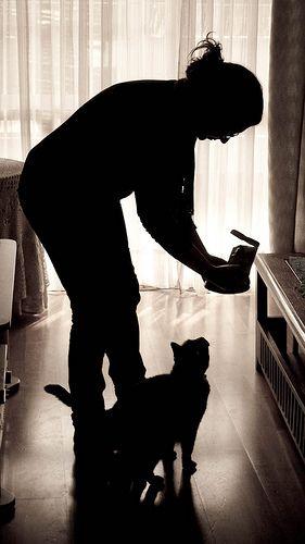 Alimentando al gato