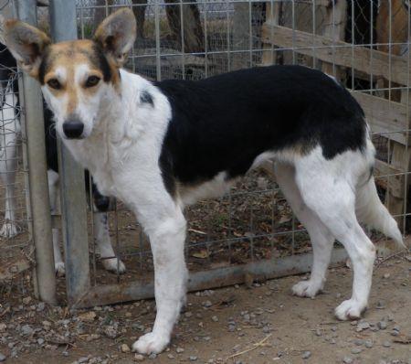 Meli, perro en adopción
