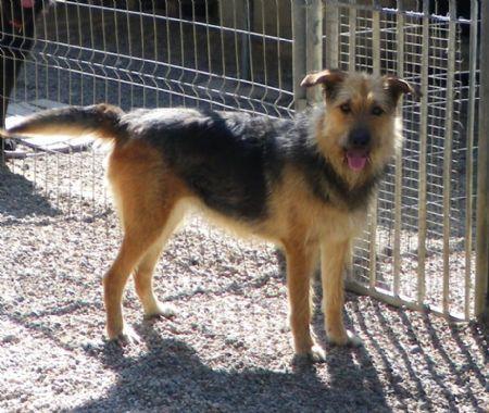 Yaki, perra en adopción