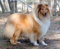 Perro con pelo largo