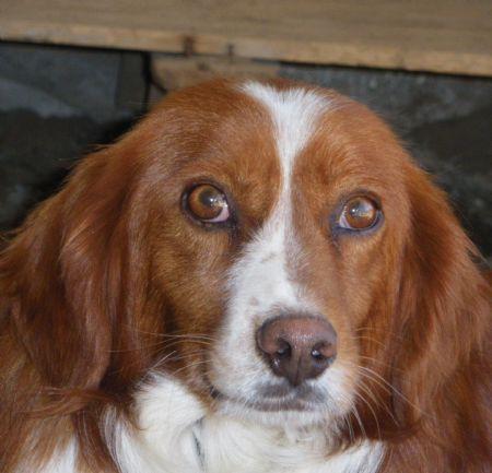 Thot, perro en adopción