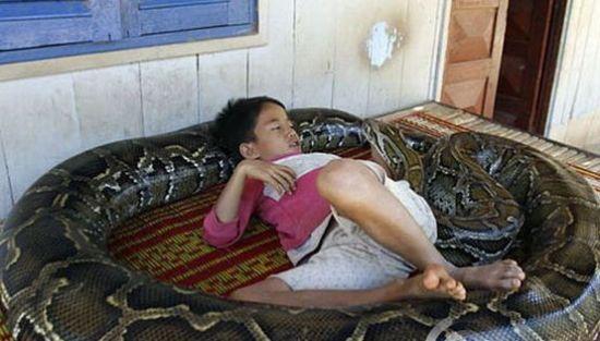 Niño y su serpiente anaconda