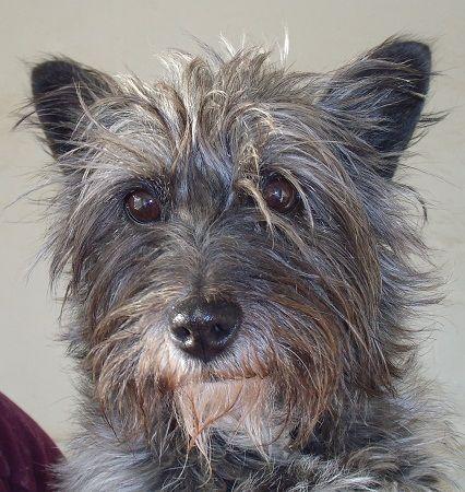 Irina, perra en adopción