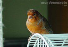 Pájaro en su momento de ocio