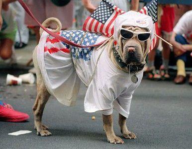 Perro con banderas de EEUU