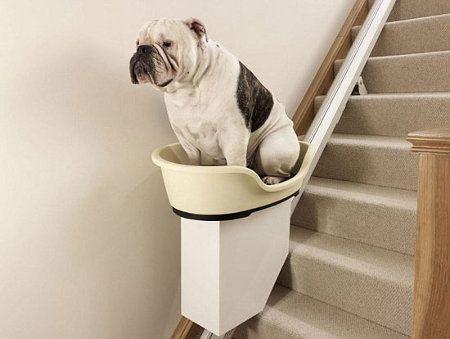 Ascensor para perros
