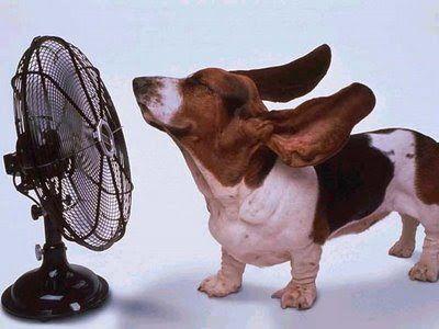 Perro sin calor