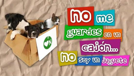 Campaña contra el abandono de mascotas