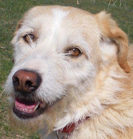 Lubaya, perro en adopción