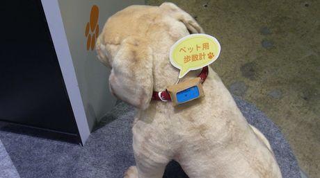 Wandant evalua la salud de tu mascota