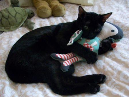 Gato jugando con peluche