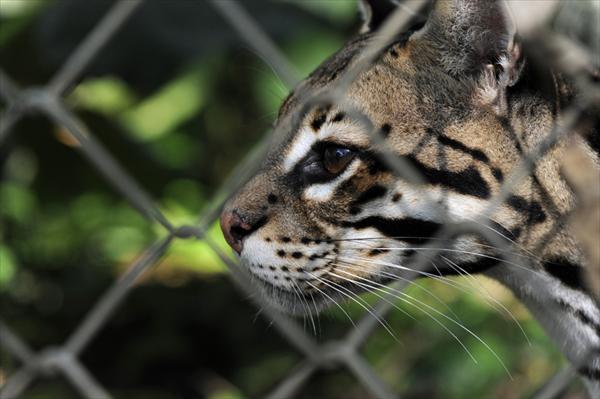 Animales en Costa Rica