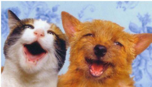 Perro y gato sonriendo